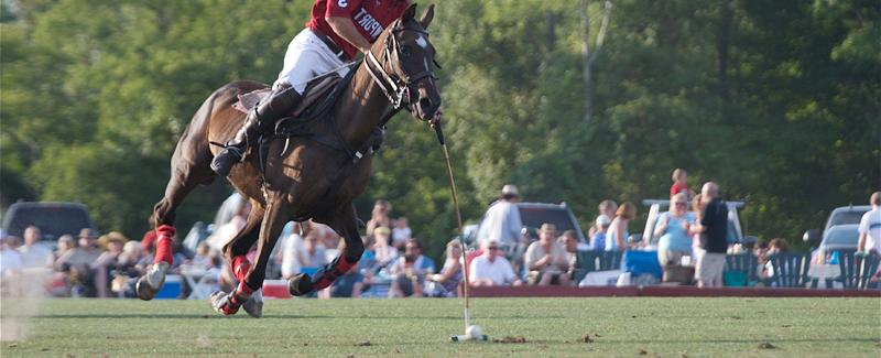 Ginger Galloping Down Field During the Newport International Polo Series