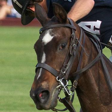 Ginger on the Field During the Newport International Polo Series